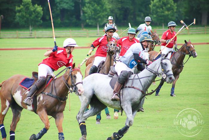 polo ponies racing during chukkar